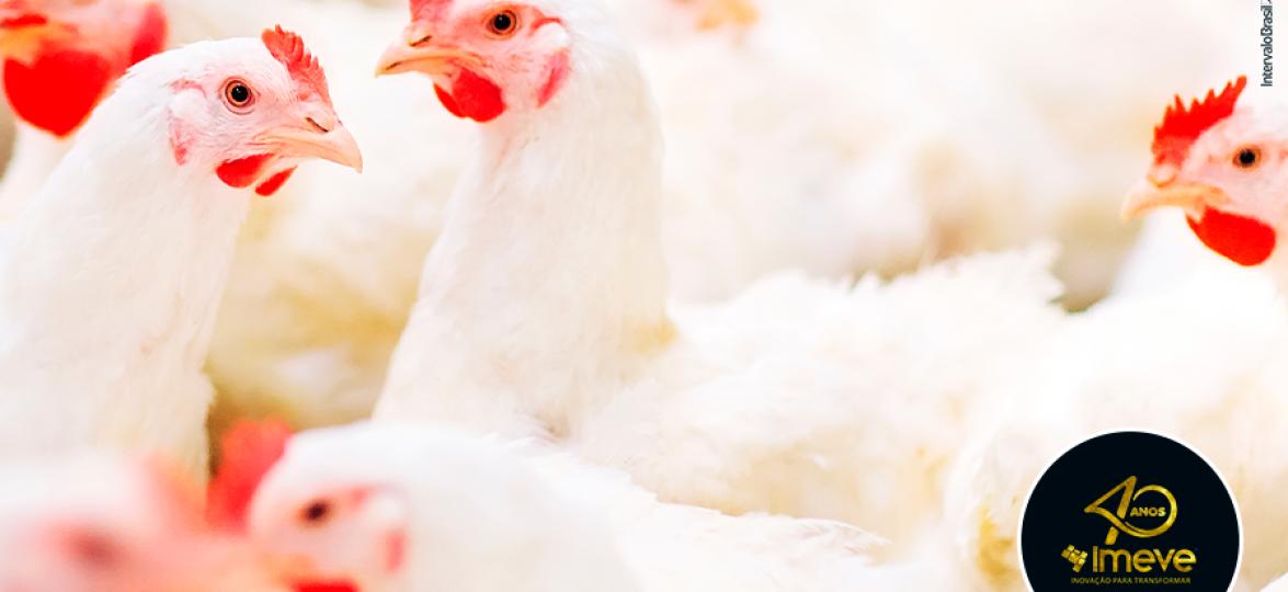 Avicultura sustentável e lucrativa