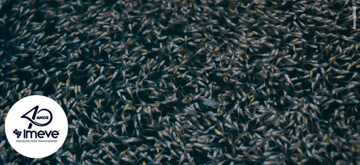 Efeito de um probiótico comercial na sobrevivência de larvas de tilápia-do-nilo (Oreochromis niloticus) durante o período de absorção do saco vitelino
