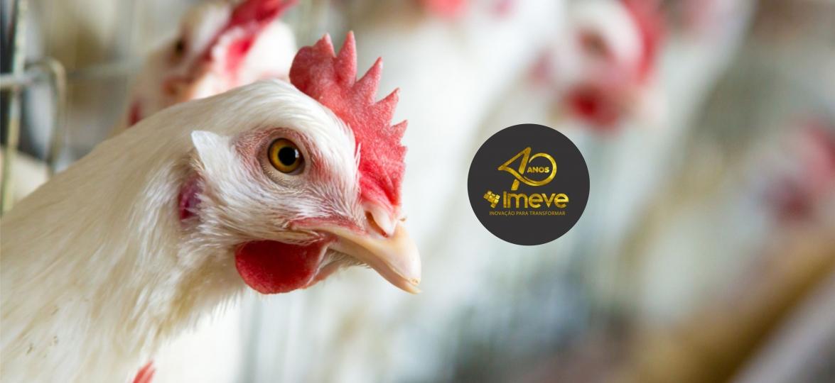 Adição de PAS TR, IMEVE S.A. controla cama frango contaminada por Salmonella Enteritidis e aumenta contagem de bactérias benéficas