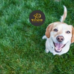 PetMax TR da Imeve S.A. aumenta imunidade em cães